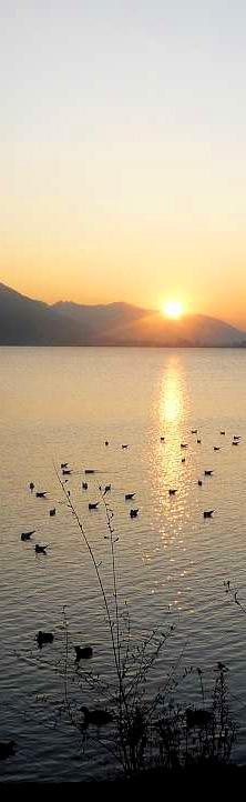 Alpsee-Sonnenuntergang-780